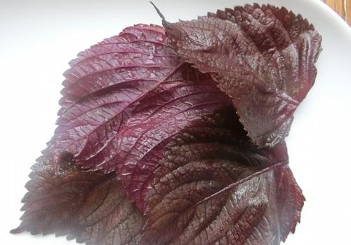 紫蘇ジュースの材料